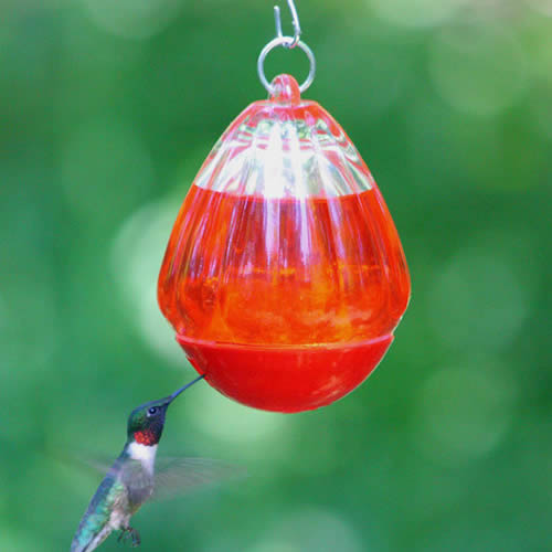Round Glass Hummingbird Feeder