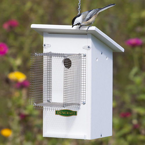 Bird-Safe' Fly Catcher Bird House and Noel Guard