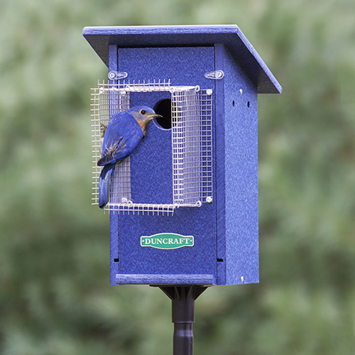 Bird-Safe® Bluebird House & Pole with Noel Guard (4481) photo