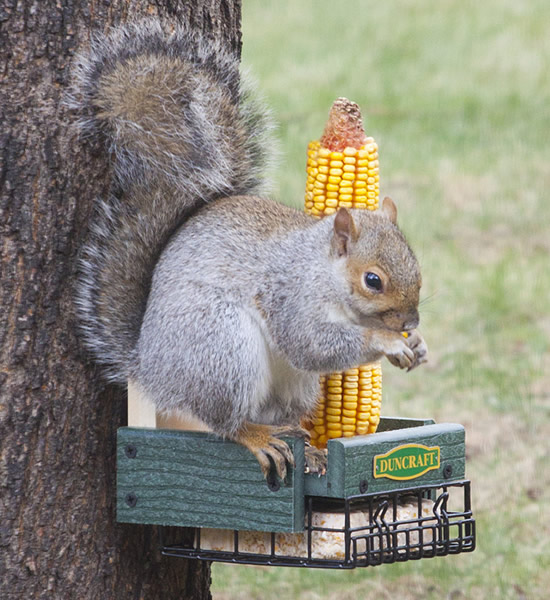 Three In One Squirrel Feeder