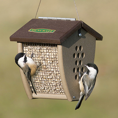 Shield Sunflower Nut Feeder