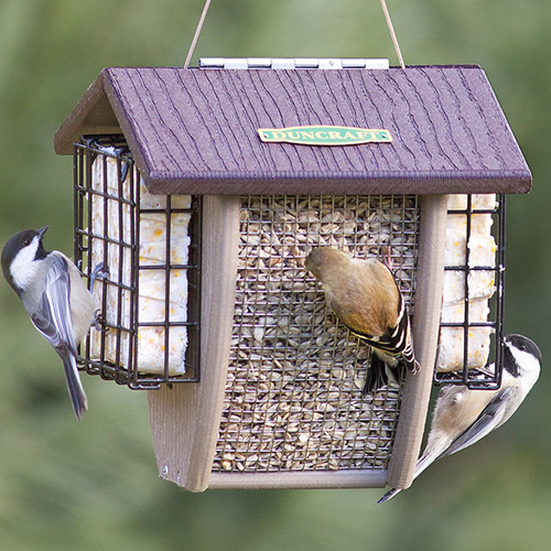 Shield Sunflower Nut and Suet Feeder