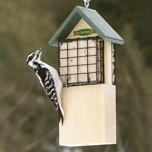 Woodpecker Tail Support Suet Feeder