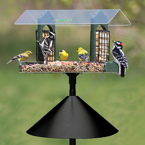 Double Delight Squirrel-Proof Feeding Station