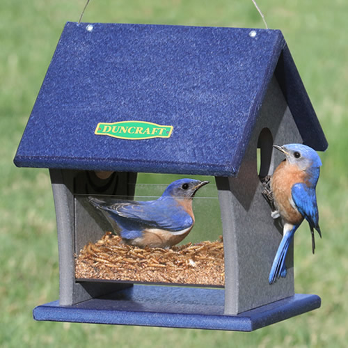 Duncraft Fly Right Inn Bluebird Feeder