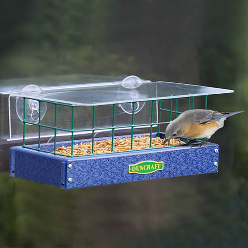 Bluebird Window Haven Feeder