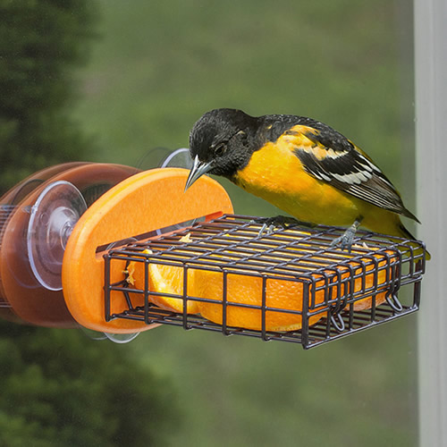 Orange Window Suet Feeder