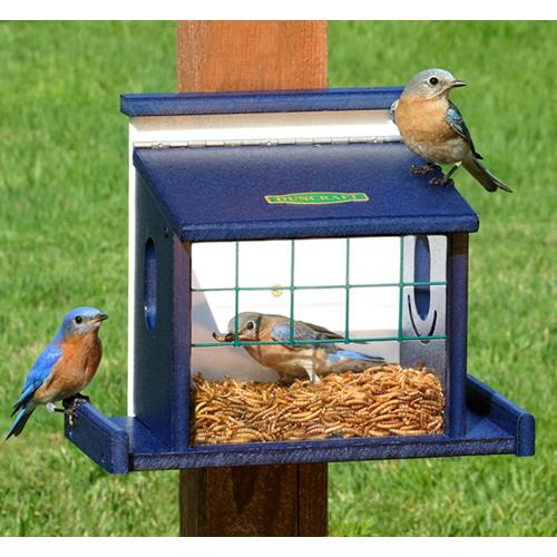 Bluebird Diner Haven