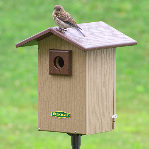 Bird-Safe® Premium Observation Bluebird House & Pole (4533) photo