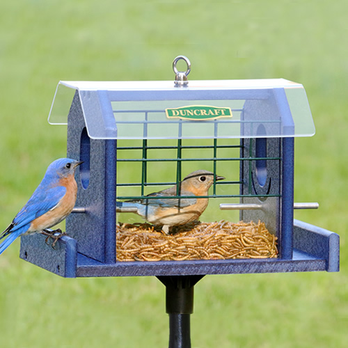 Bird Safe'® Bluebird Haven Feeder