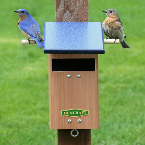 Bluebird Watch Tower House
