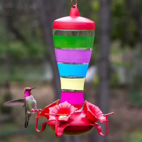 Colorful Stripes Funnel Top Feeder