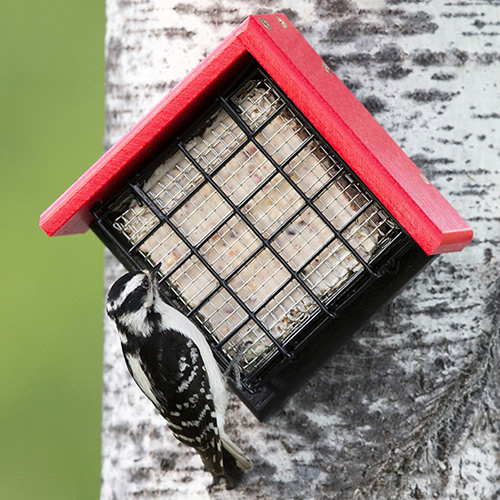 Sheltered Suet Shield Blocker Tree Mount