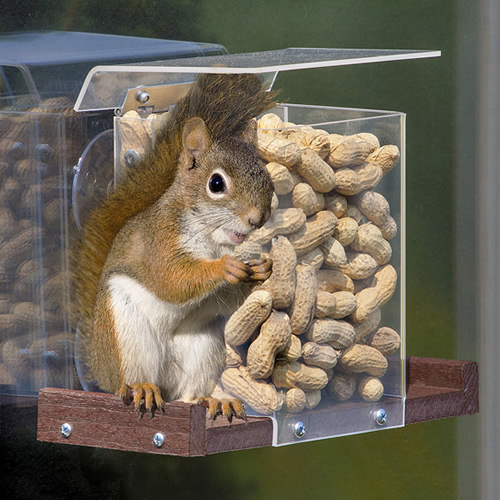 Pandoras Box Window Squirrel Feeder