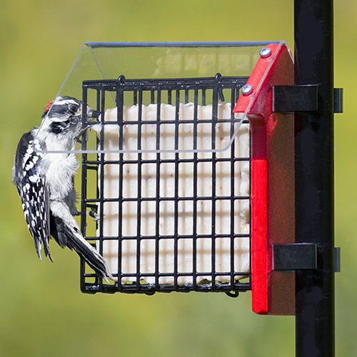 Weather Sheltered Suet Feeder