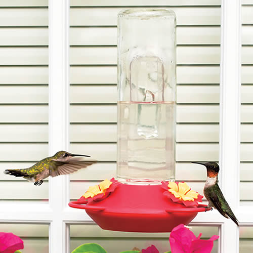 Window Mounted Glass Hummer Feeder
