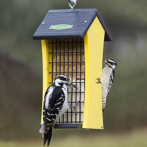 Duncraft Suet Attractor Feeder