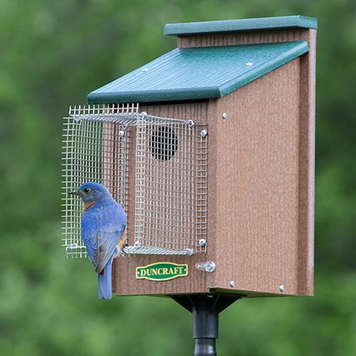 Bluebird House with Pole & Noel Guard (4558) photo