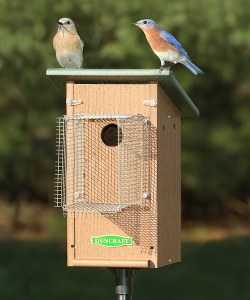 Duncraft Com Bird Safe Bluebird House Amp Pole With Noel Guard