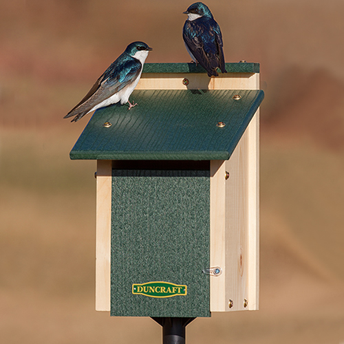 Bird-Safe' Swallow Nest Box