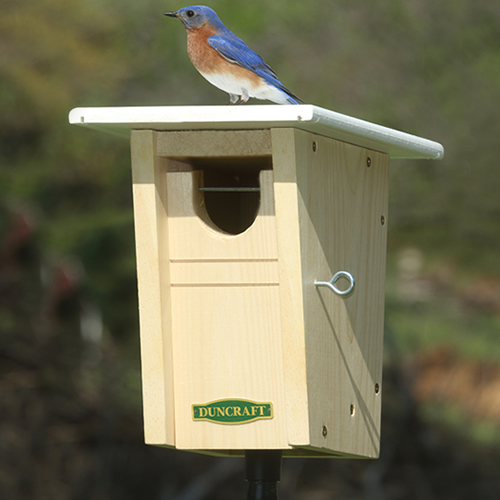 Bluebird Trail House and Pole