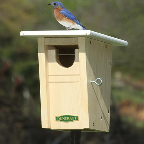 Bluebird Trail House & Pole (4588) photo
