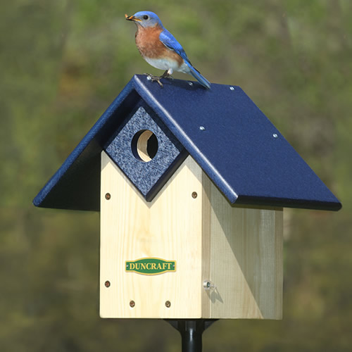Chalet Bluebird House and Pole