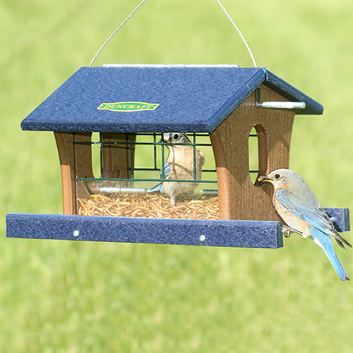 Bird Safe'® Extreme Bluebird Feeder