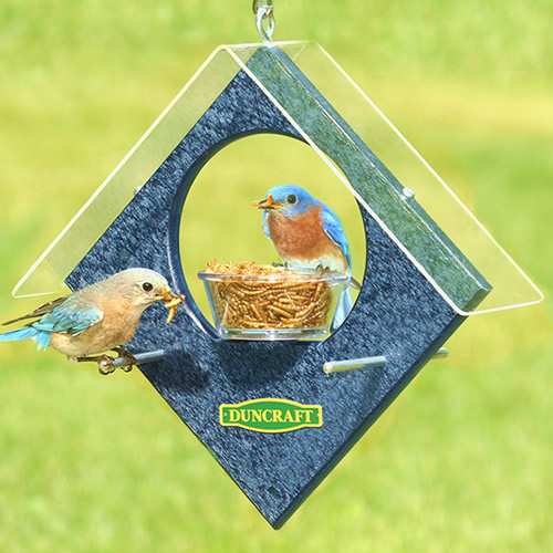 Duncraft Sheltered Bluebird Feeder