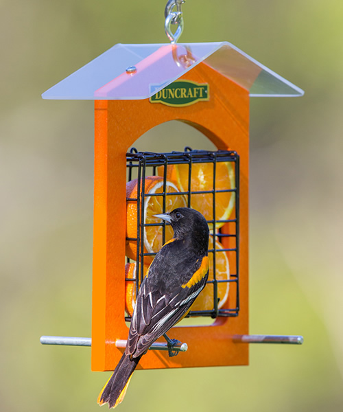 Double Sided Orange Feeder