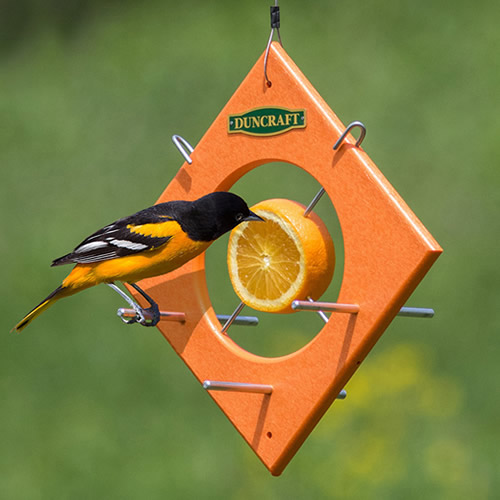 Duncraft Oriole Fruit Locker Feeder