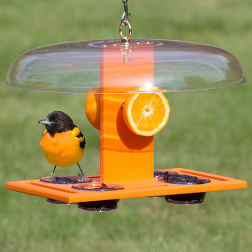 Deluxe Oriole Jelly Feeder