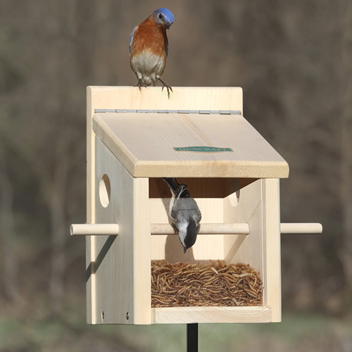 Bluebird Move-A-Round Feeder and Pole