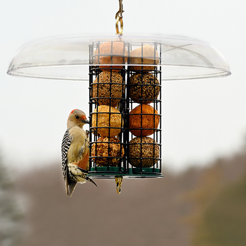 Deluxe Seed and Suet Ball Feeder