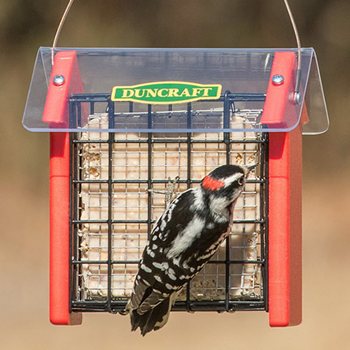 Red Arrow Covered Diner Suet Feeder