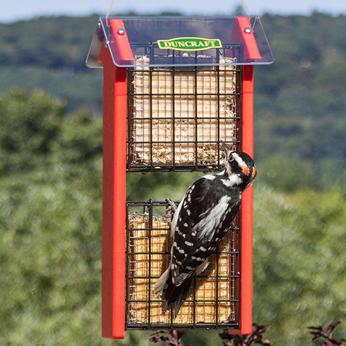 Red Arrow Double Diner Suet Feeder