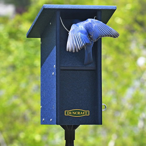 Duncraft Bluebird Swing Blocker House & Pole (4767) photo