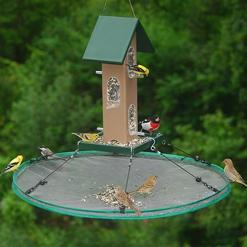 30- Seed Hoop