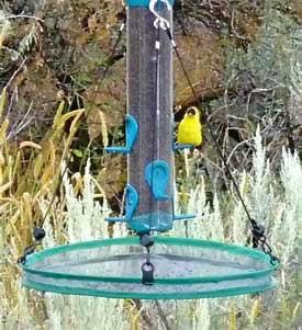 """16"""" Seed Hoop"""