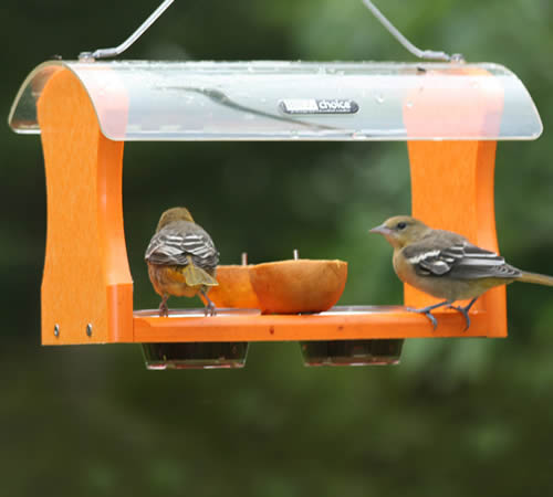 Fruit Jelly Oriole Feeder