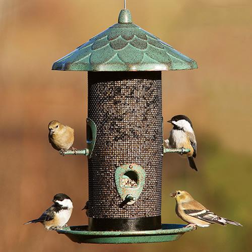 Acorn screen bird feeder for Acorn feeder