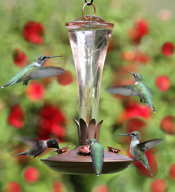 Landmark Hummingbird Feeder