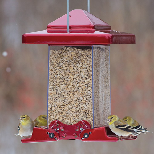 Reflective Red Vista Feeder