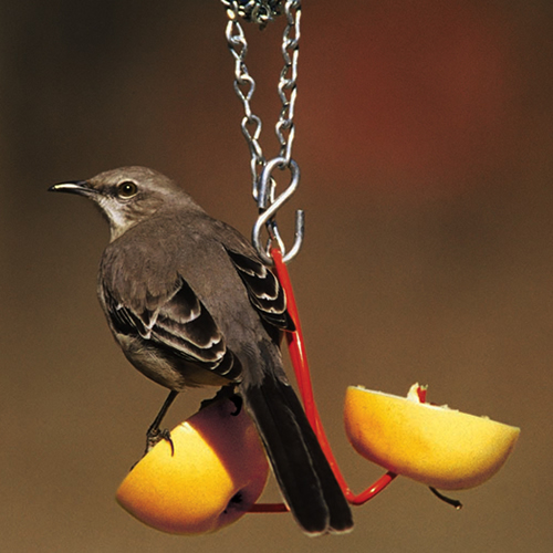 Droll Yankees Fruit Feeder