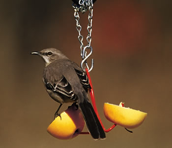 Droll Yankees Fruit Feeder CountryMax.com