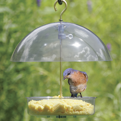 Droll Yankees Seed Saver Bird Feeder