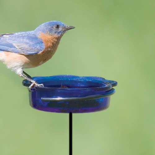 Bluebird Dish Stake Feeder