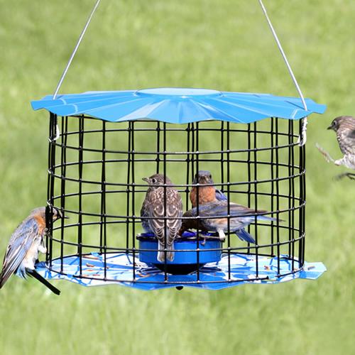 Baffled Bluebird Feeder