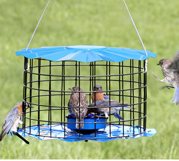 Baffled Bluebird Feeder