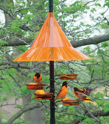Orange Dish Feeders Set of 2